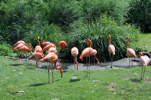 Flamingos in the Jardin des Plantes - The Wishing Tree Blog